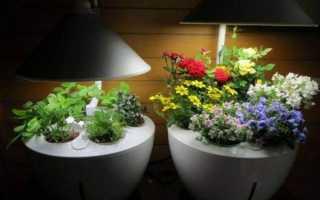 Как выбрать светодиодную фитолампу для растений