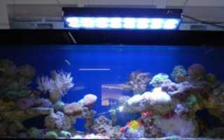 Светильники для аквариума: выбираем лампу и организовываем освещение